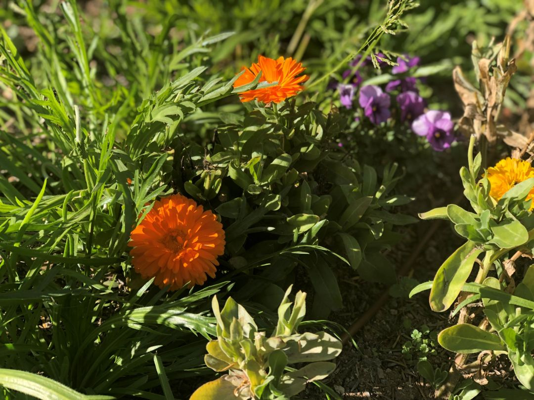 AA-TheFarm-edible-flowers-IMG_4873 - Copy-Reducesizetest