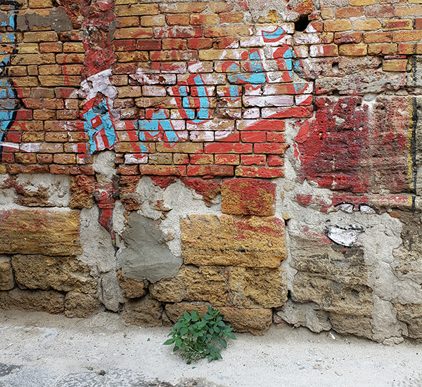 Amuni, Palermo street art