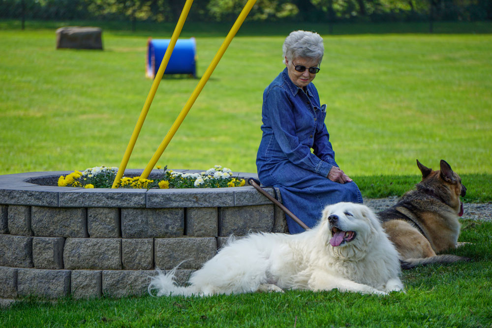 Dog-Park-Owego-Tioga-County-Dogs-in-the-Shade