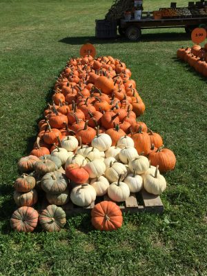 Huizinga Farmstand Candor Tioga County NY Pumpkins A