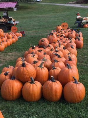 Huizinga Farmstand Candor Tioga County NY Pumpkins