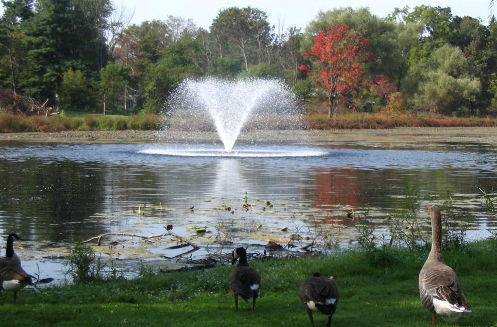 Nichols Pond Park