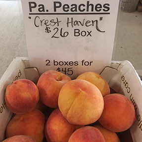 Iron-Kettle-Farm-Candor-Peaches-Tioga-County