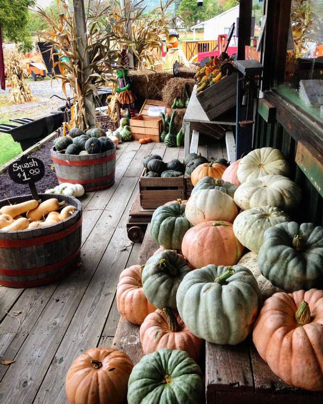 Jackson's-Pumpkin-Farm-Gourds-Web