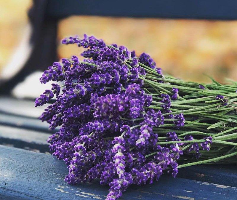 Pasto Lavender Farm