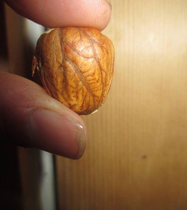 Twisted Tree Nut Farm