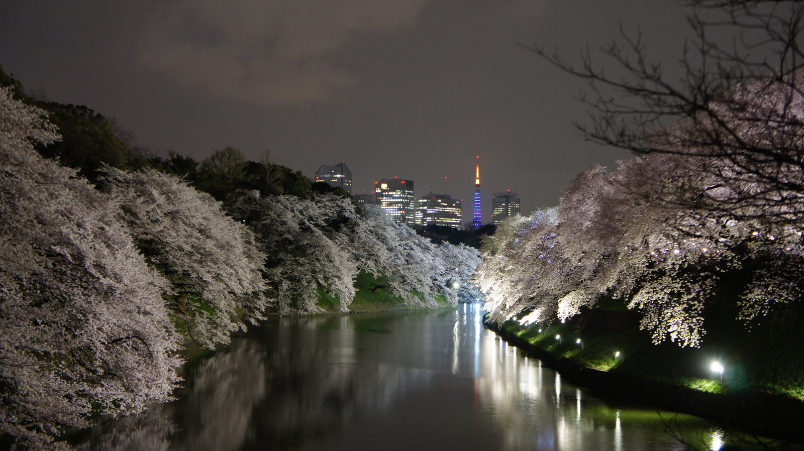 Chidorigafuchi Cherry blossoms and the beautiful night time illumination
