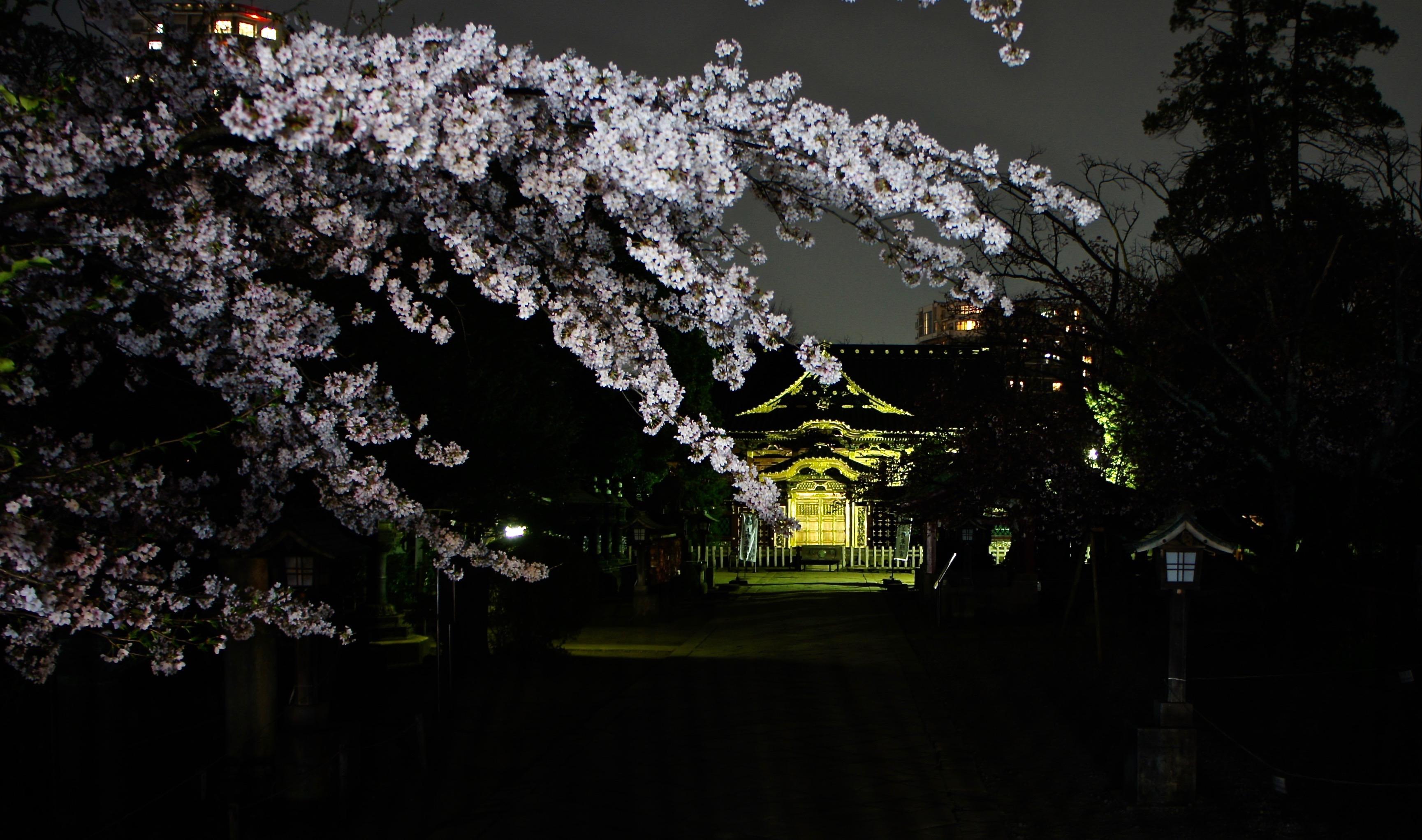 Tokyu Plaza Ginza : Kiriko Lounge and Terrace