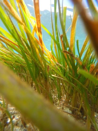 gräs2