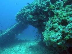 koralltunnel