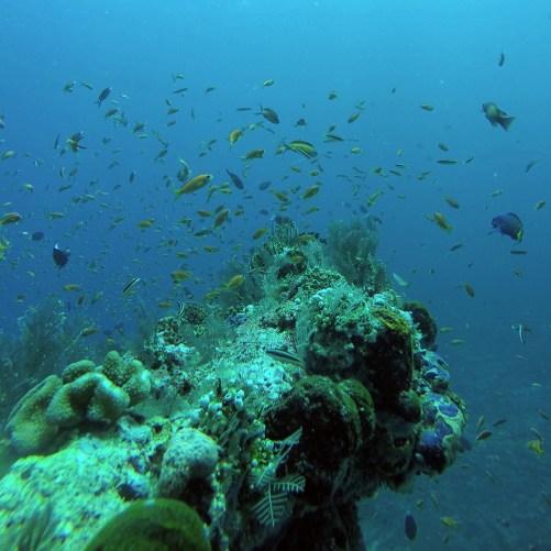 mylleravlivvidkorrall
