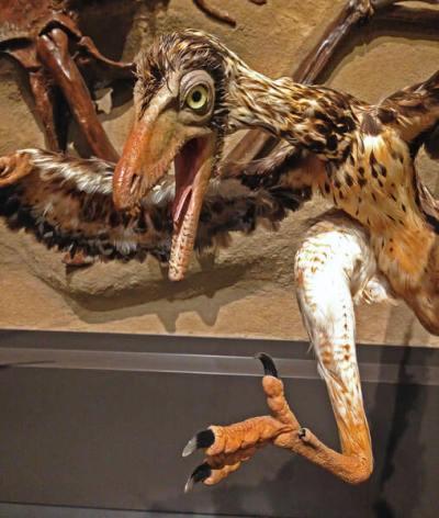 pajaro museo naturaleza canada