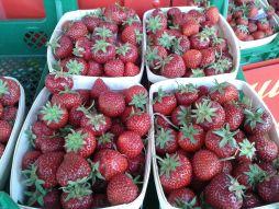 Karls Erdbeeren - der wunderbare Duft verführt einen schon beim Vorbeiradeln. Hmmmmm...