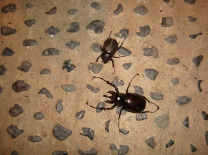 large insects
