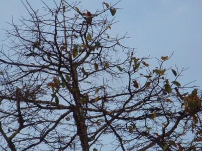 tree monkey 4