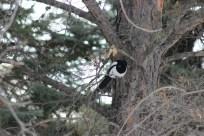 magpie new 2