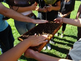 Petting the bees!