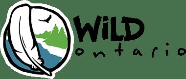 Wild Raptors in Ontario!