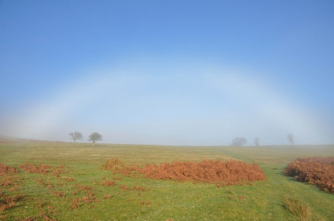 WillFogbow