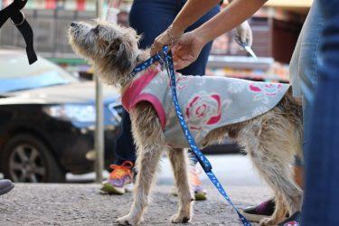 cachorro-moradores-de-rua-e-seus-caes-3
