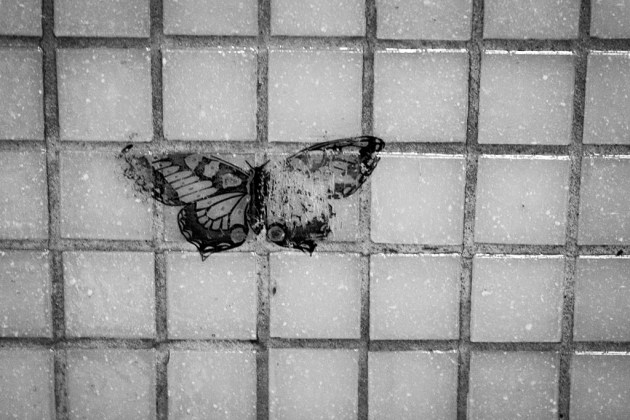 2011-11-10_urban-butterfly