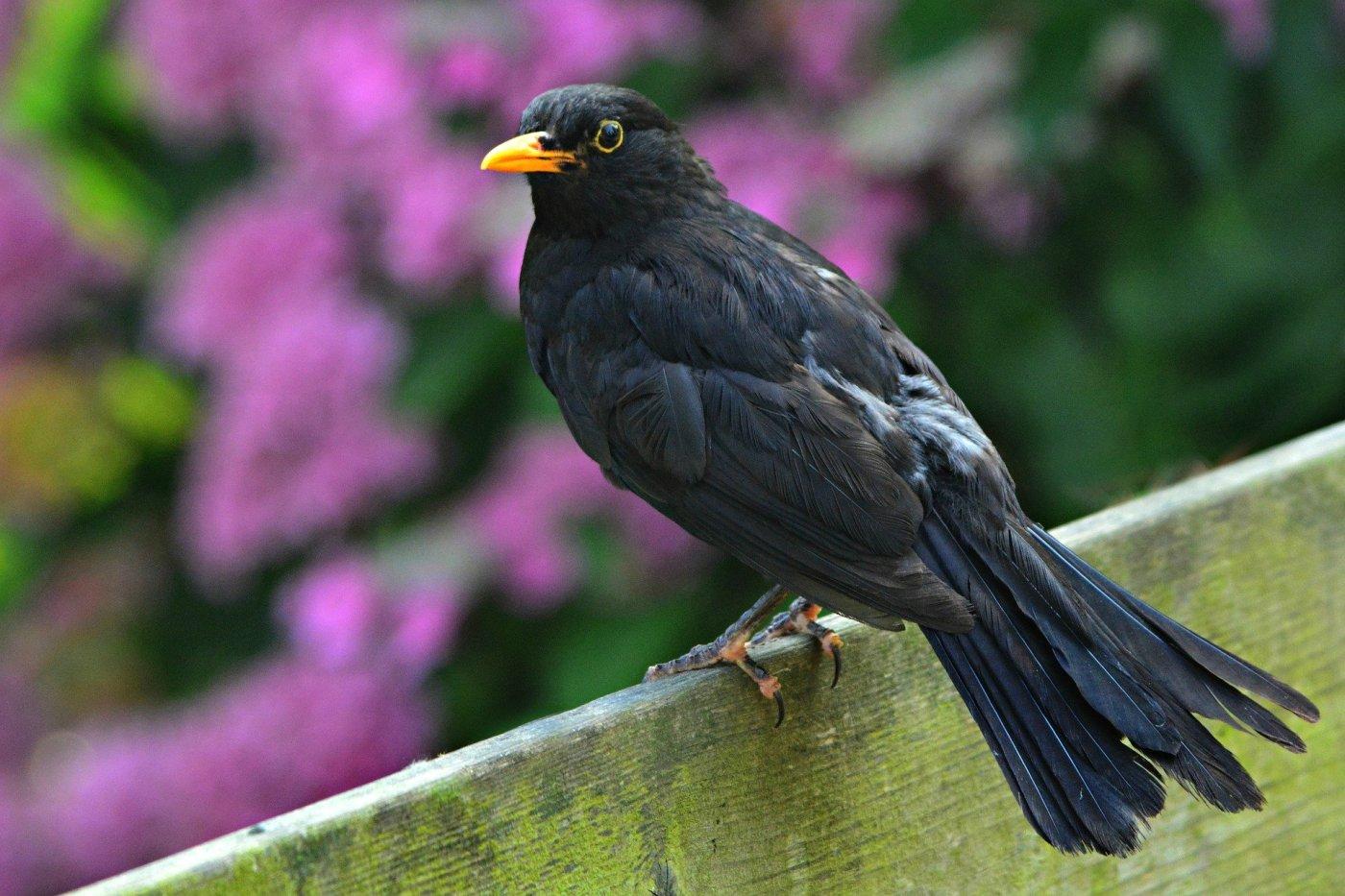 Bird as a symbol of life