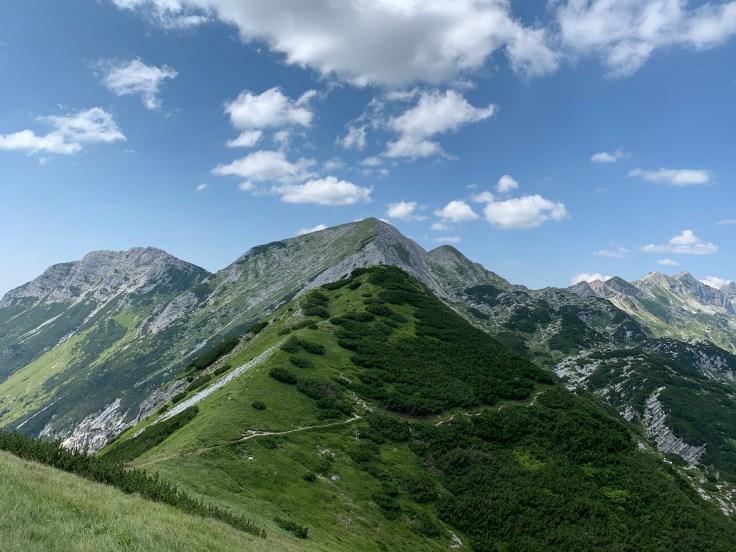 Hiking Vogel