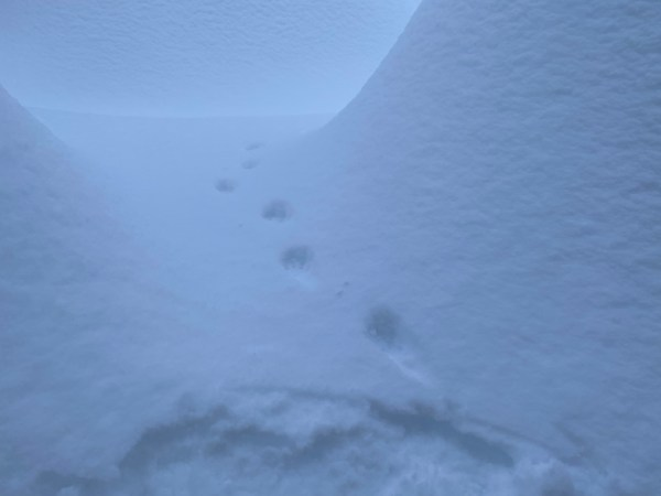 animal footprints in snow