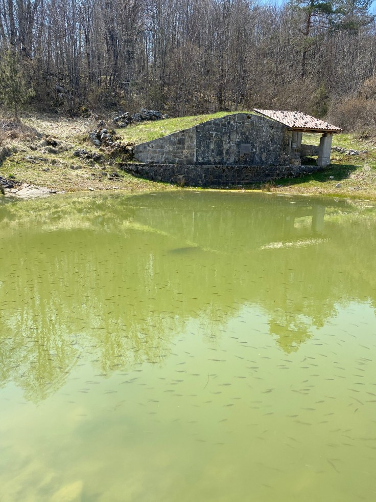 pond and well
