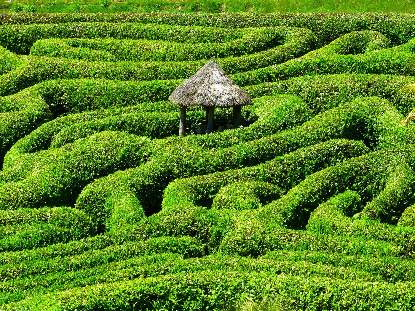 Labyrinth of life