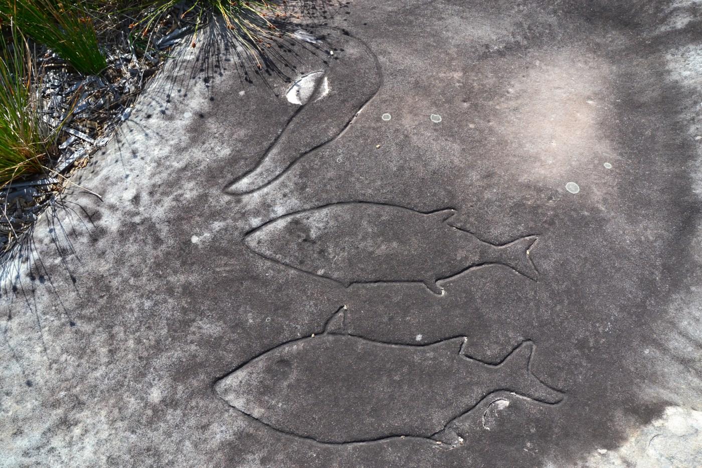 Whale Petroglyph