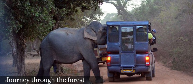 safari throught the jungle