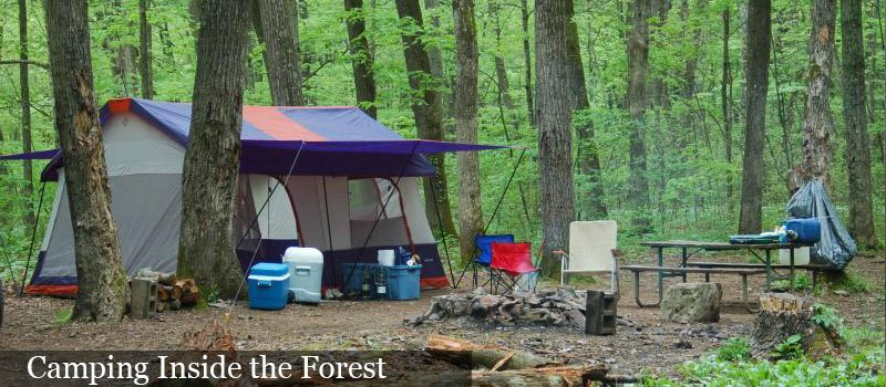 Fortnight camping in a Jungle