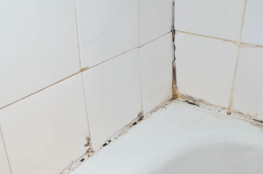 checking for mold behind shower tiles