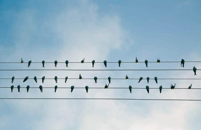 The silhouettes of birds perched on 5 electrity wires against a blue sky - digital photography for beginners