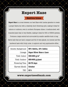 Expert Haze