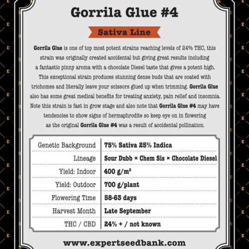 Gorrila Glue #4