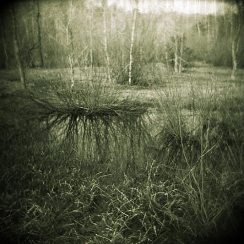 Meadow, Beaver Lake, Baldwinsville, NY.