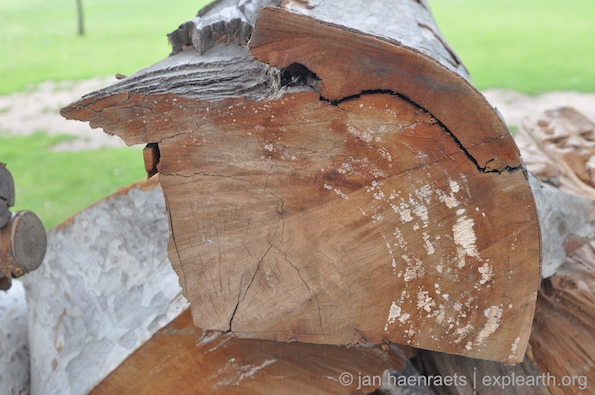 Wood of a Chinar tree that was lost at Shalimar Bagh. The tree should be documented so that plant records are kept for future reference and understanding. For instance, wood should be tested on diseases, and the tree's age should be established. The location of the tree should be marked on a map and photographic records should be kept (Photo: Jan Haenraets, 2015).