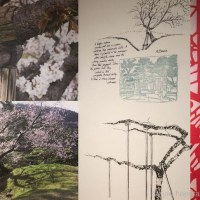 Japanese Cherry Blossoms - Washington, DC Exhibitions