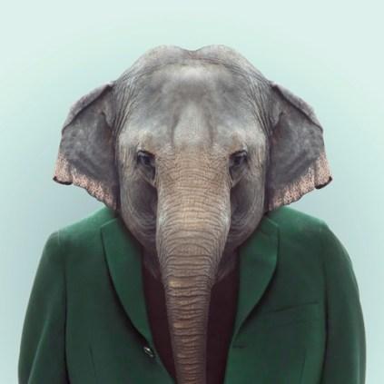 Zoo-Portraits-Yago-Partal-explicark20