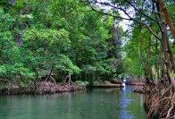 Rainforest Day Tours