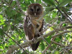 overnight birding tours of the dominican republic