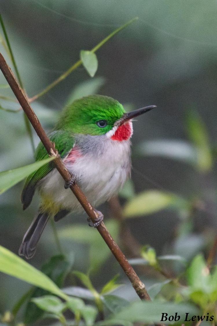 Southwest Birding Tour Dominican Republic