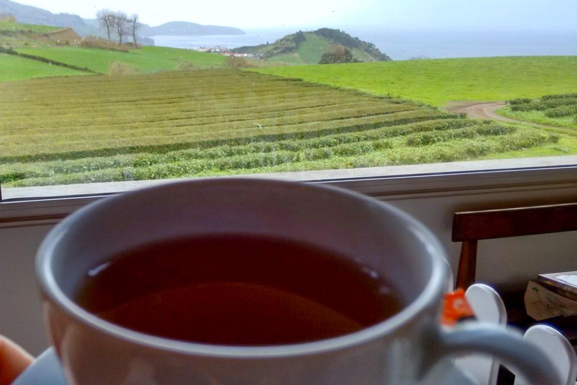 Vista para as plantações de chá da Gorreana, nos Açores