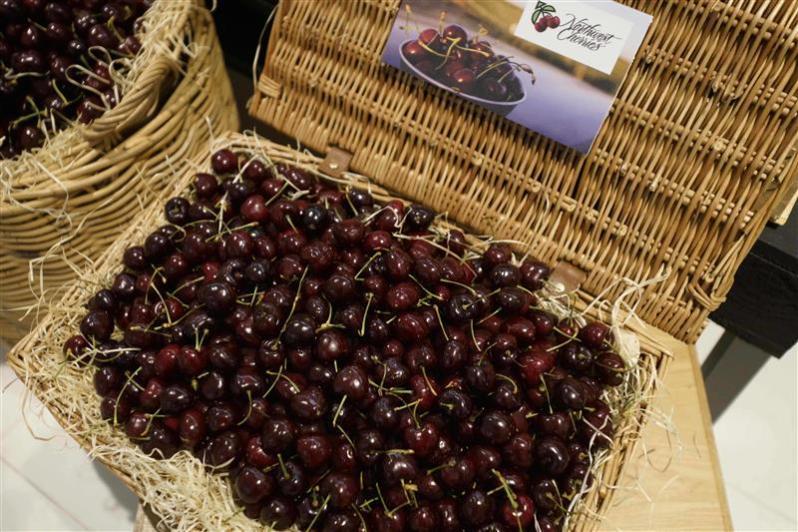 Basketful of freshly picked Northwest Cherries