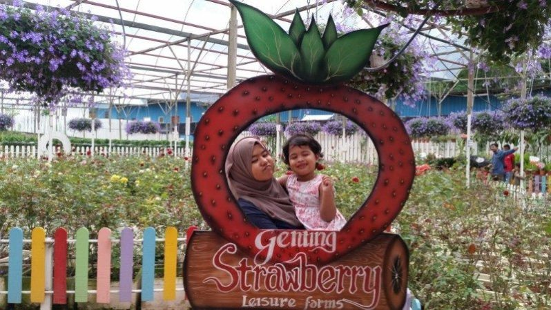 genting-strawberry-leisure-farm-9