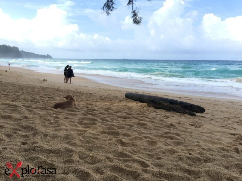 the-lifeco-phuket-naithon-beach-4