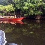 mangroove 7