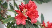 bnb-rotorua-flower-red-2